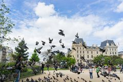 Pigeons in front of Notre Dame de Paris. ,France,may 2015 Stock Image