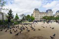 Pigeons in front of Notre Dame de Paris Royalty Free Stock Images