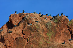 Pigeons in Garden of the Gods Royalty Free Stock Photo