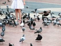 Pigeons. A girl with pigeons Royalty Free Stock Image
