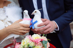 Pigeons in the hands of the bride and groom in the wedding day royalty free stock photo