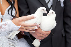 Pigeons in hands of the groom and the brid Royalty Free Stock Photography
