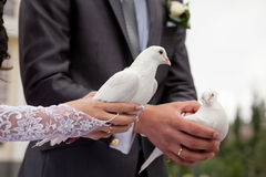 Pigeons in hands of the groom and the bride Royalty Free Stock Images