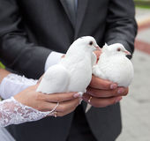 Pigeons in hands of the groom and the bride Stock Photos