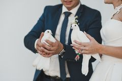 Pigeons in hands 2364. stock photos