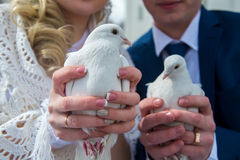Pigeons in hands Royalty Free Stock Images
