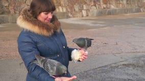 Pigeons in the hands of women stock video