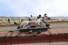 Pigeons on a Hindu Cow Royalty Free Stock Photos