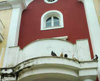 Pigeons. In a house in Alexandras Avenue in Corfu island Greece Stock Photos