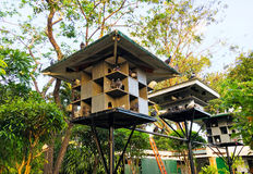 Pigeons house. Lots of pigeons in Manila Stock Images