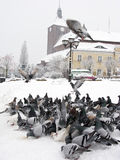 Pigeons In Winter City Stock Photos