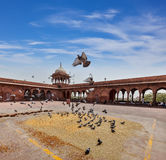 Pigeons in Jama Masjid mosque Royalty Free Stock Photography