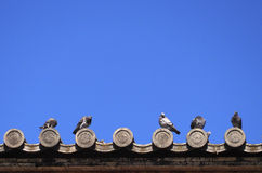 Pigeons on japanese temple roof Stock Photo
