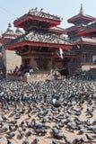 Pigeons in Kathmandu Stock Photography