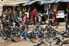 Pigeons in Kathmandu, Nepal. A flock of pigeons on the street in Kathmandu. People feeding pigeons stock photography