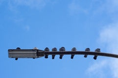 Pigeons on a lamp post. Pigeons that are sitting on a lamp post Stock Photos