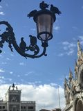 Love in San Marco square, Venice royalty free stock images