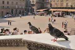 Pigeons On a Ledge Stock Photography