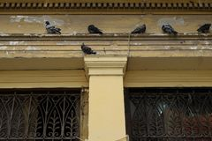 Pigeons on ledge of neoclassical building royalty free stock photography