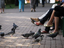 Pigeons and legs Royalty Free Stock Photo