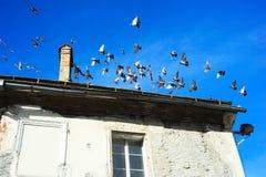 Pigeons in Ljubljana Stock Image