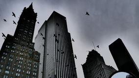 Pigeons. A look at the pigeons flying over NYC stock photo