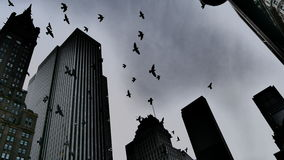 Pigeons. A look at the pigeons flying over NYC royalty free stock photos