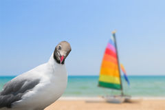 Pigeons looking at blurred image of colorful yacht boat Stock Photos