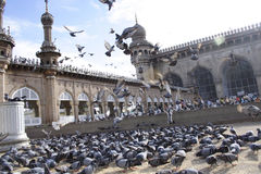 Pigeons at Mecca masid. Feeding Pigeon at famous historical monument Mecca Masjid,Hyderabad Stock Image