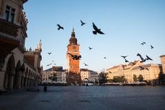 Pigeons in the morning Krakow Stock Photos