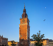 Pigeons in the morning Krakow Royalty Free Stock Photography