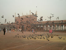 Pigeons in mosque Stock Images