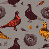 Pigeons and nest. Royalty Free Stock Photography