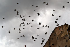 Pigeons on a old building. Pigeons on an old building in the city of Brasov, Romania, Europe. The sky is gray stock image