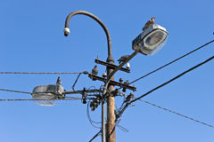 Pigeons on old streetlight Royalty Free Stock Photo