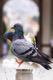Pigeons On Fountain Royalty Free Stock Photo