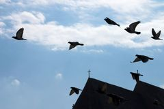 Pigeons over the sky. Pigeons flying over the sky Stock Images