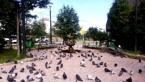 Pigeons in the Park city Magadan. Fountain small. Located in the Magadan city of Russia. The extreme North-East Asia Stock Photos