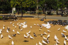 Pigeons in the park Royalty Free Stock Images