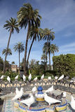 Pigeons in a Park in Seville Royalty Free Stock Photo