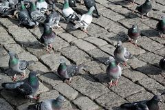Pigeons in the park Stock Photo