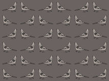 Pigeons pattern Royalty Free Stock Image