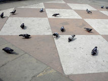 Pigeons on the pavement. Pigeons pecking at colored pavement stock photos