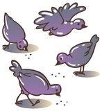 Pigeons peck feed Royalty Free Stock Images