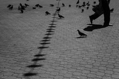 Pigeons and pedestrian. City view of square wih pigeons and pedestrian Stock Photos