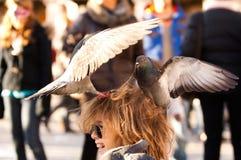 Pigeons picotant le riz sur la tête d'un enfant Photo stock