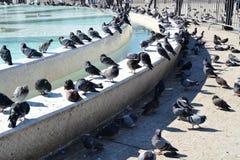 Pigeons, place de Mohamed V, Casablanca, Maroc photos stock