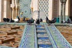 Pigeons playing in a fountain in Hassan II mosque. Royalty Free Stock Photos