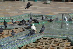 Pigeons playing in a fountain in a mosque. stock photo