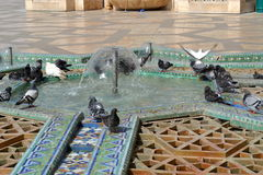 Pigeons playing in fountains. royalty free stock image
